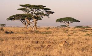 1364904711_2!!-!!serengeti-landscape